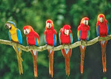 Amazing Pictures of Animals, Photo, Nature, Incredibel, Funny, Zoo, Red-and-green Macaw, ara chloropterus, Bird,  Alex.  (16)