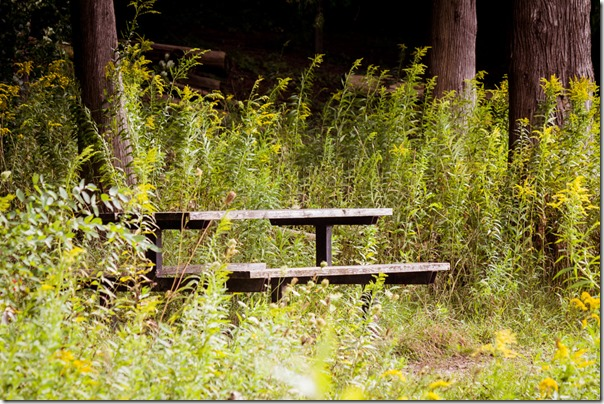 picnic table among the wildflowers