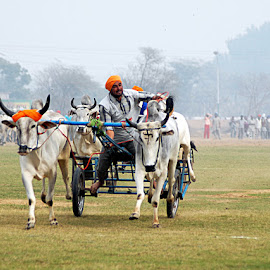 Final Round by Rakesh Syal - News & Events Sports ( animals, people )