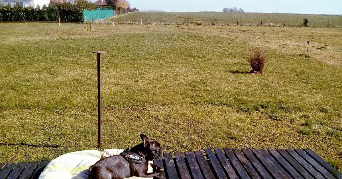 Griffin bouledogue fran ais soleil et balade - A quelle heure le soleil se couche aujourd hui ...