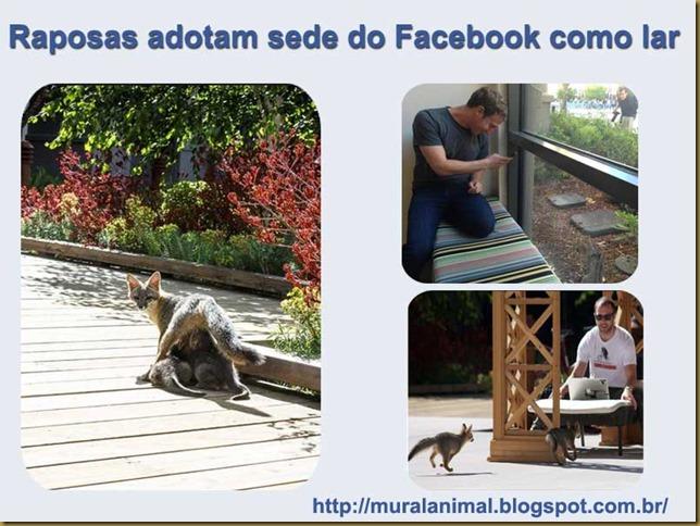 raposas_facebook