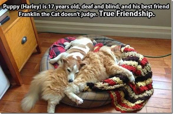 best-friends-life-034