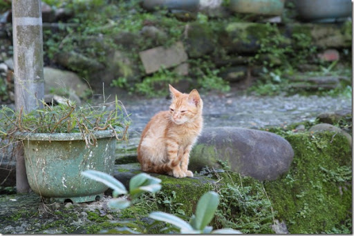 平溪老街-悠閒的小貓咪
