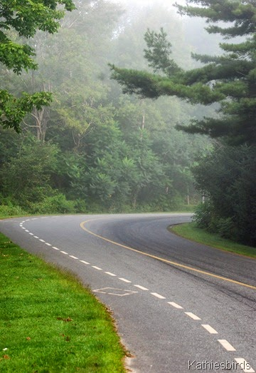 8. foggy road-kab