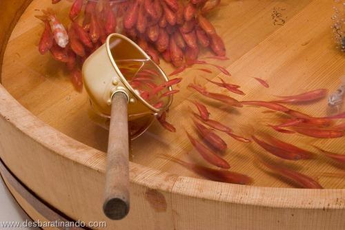 peixes pintados em 3d desbaratinando (12)