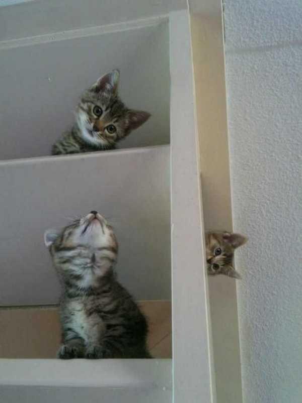 Os gatos não são muito bons em esconde-esconde 19