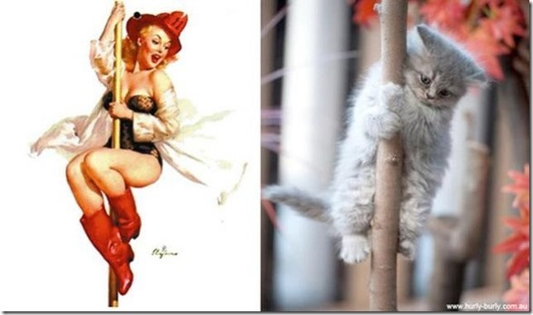 cats-pinup-models-19