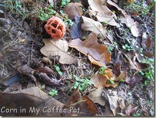 Garden stuff - Nov 2011- Fall mushroom 020