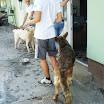 Galerija - Kupanje i šetnja pasa iz Skloništa u Belom Manastiru 20.6.2013.