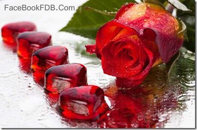 postales flores (8)