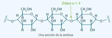 almidon 1