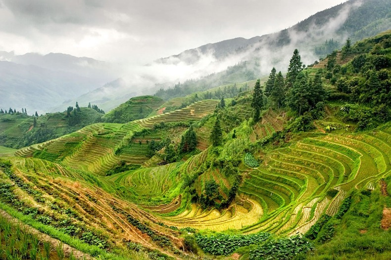 rice-terraces-16