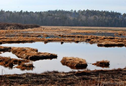 20. tidal marsh-kab