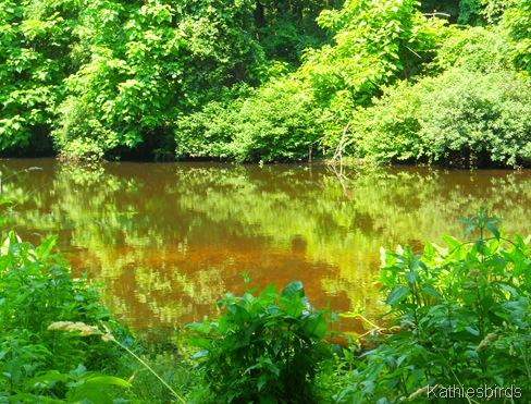 17. shawsheen river-kab
