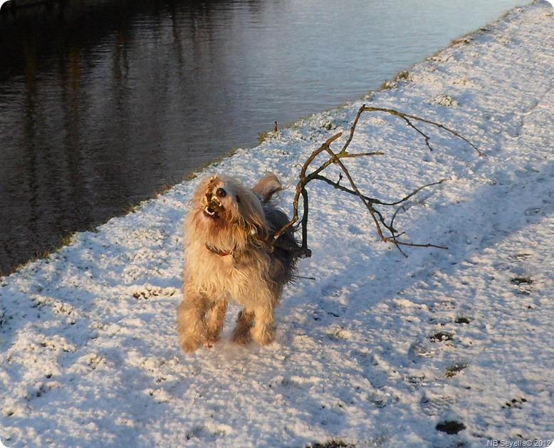 SAM_0010 Snowy Ellesmere