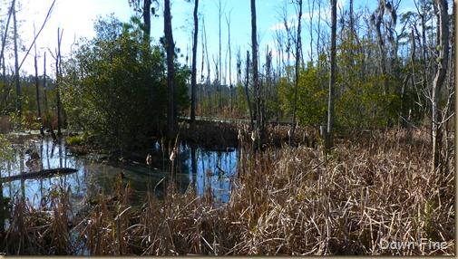 Goose Creek State Park _013