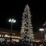 christmas tree across the duomo in Milan, Milano, Italy