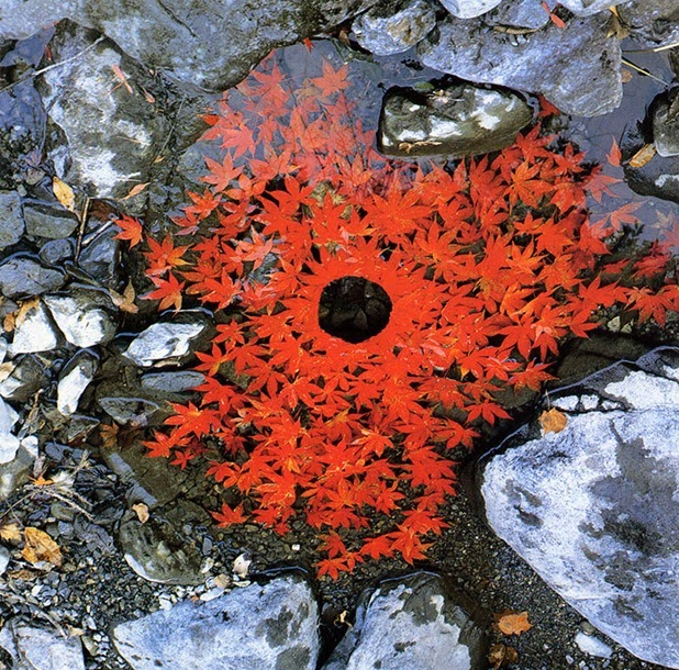 andy goldsworthy 9