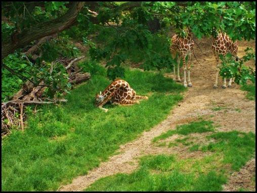 Zoo4 520