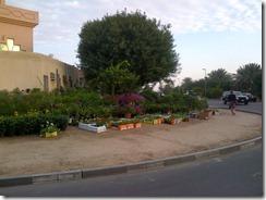 Dubai-20121208-00078