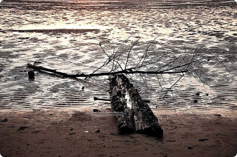 Driftwood-(1)