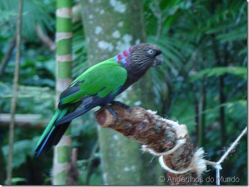 Anacã Parque das Aves Foz do Iguaçu BlogTurFoz
