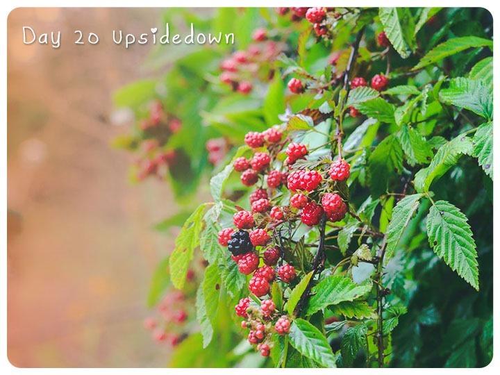20 upsidedown