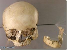 Cráneo y mandíbula de Homo sapiens - Cueva del Parpalló