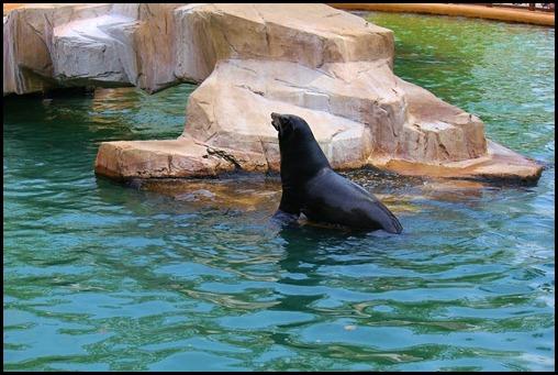 Zoo4 454