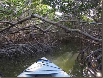 kayaking at Curry Hammock State Park, mangrove