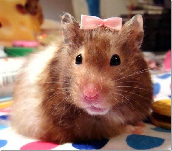 funny-animals-cute-025