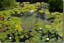 Herb Garden Lily Pond