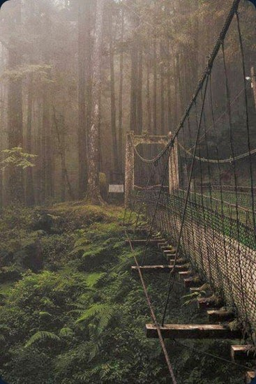 Forest-Bridge-Japan