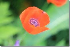 nybg-new-york-botanic-gardens-bronx-009