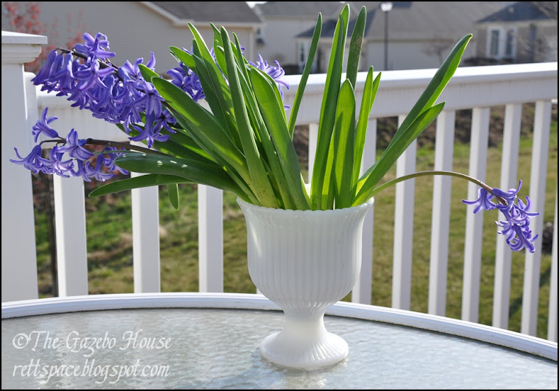 Liliacs, daffodills, cyclamen 055