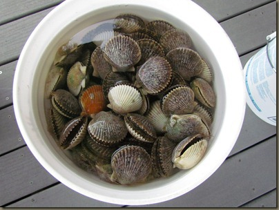bucket of scallops