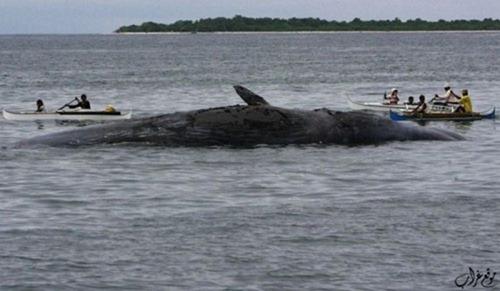 Bury Whale