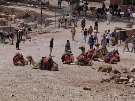 Obiective turistice Petra: Statia de camile