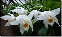 glasgow botanics 011
