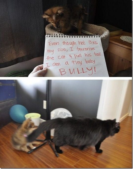 dog-shaming-bad-37
