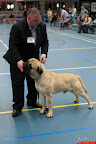 20130510-Bullmastiff-Worldcup-0495.jpg