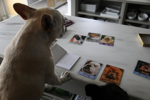 Wait...this can't be right...there's no French Bulldog in this deck!  That's just not fair!