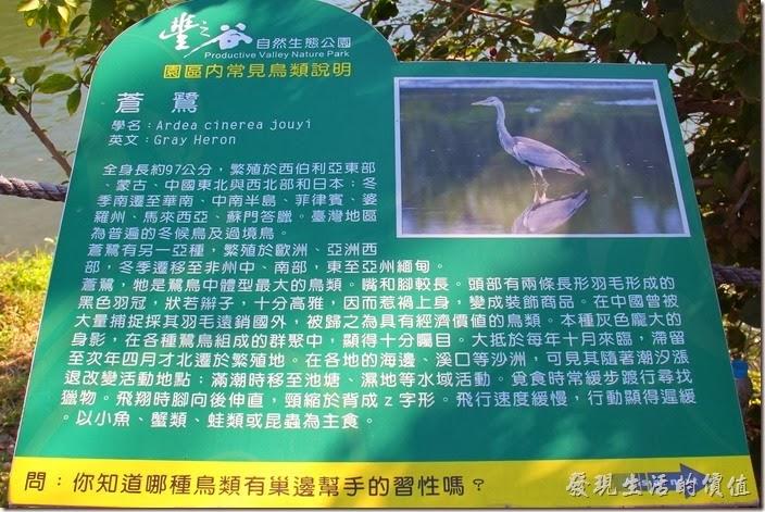 花蓮-理想大地渡假村-豐之谷生態公園(蒼鷺)