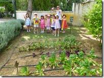 επίσκεψη στο λαχανόκηπο (2)