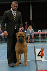 20130510-Bullmastiff-Worldcup-0559.jpg