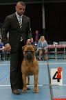 20130510-Bullmastiff-Worldcup-0559.jpg