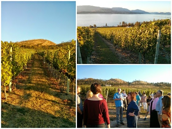 Darryl Brooker leads a short tour of the CedarCreek Home Vineyard