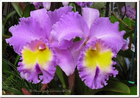 02-08-orchids11