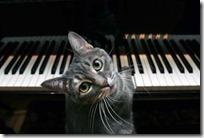 gato pianista blogdeimagenes (17)