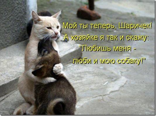 kotomatritsa_Z5
